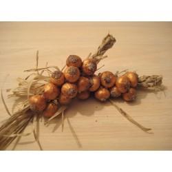 Treccia di cipolle 7