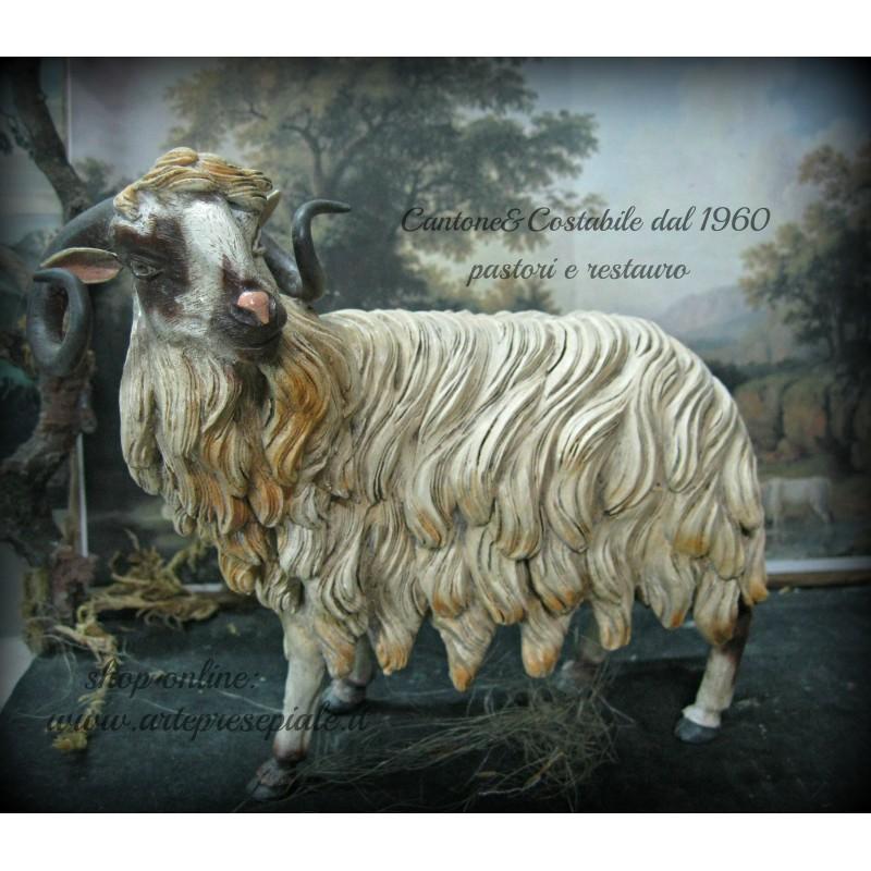 Pecore orientali 2 - 1 7