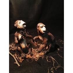Coppia scimmie