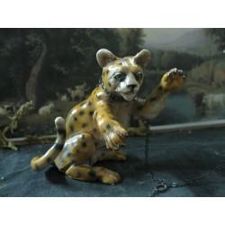 Cuccioli di ghepardo