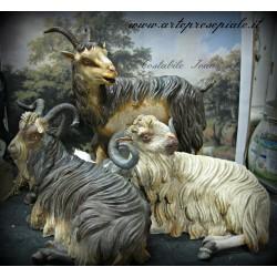 Gruppo capre
